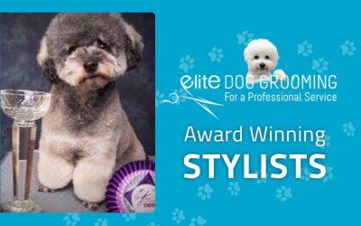 Award Winning Dog Groomer